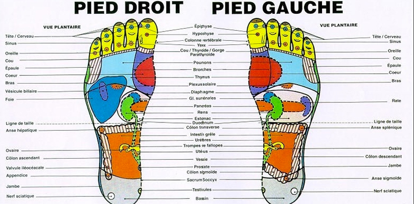points-organes-reflexologie