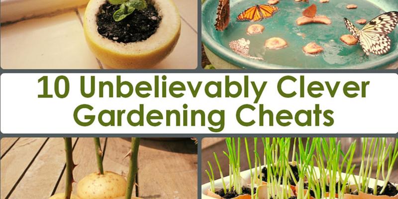 10-astuces-de-jardinage-qui-vont-transformer-votre-cour